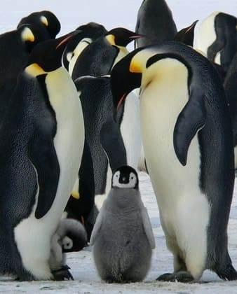 collective noun penguins 5